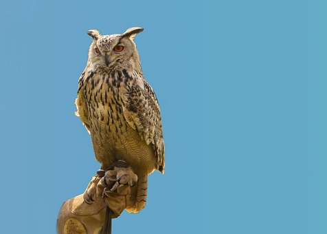 Animal World, Nature, Animal, Bird, Eagle Owl