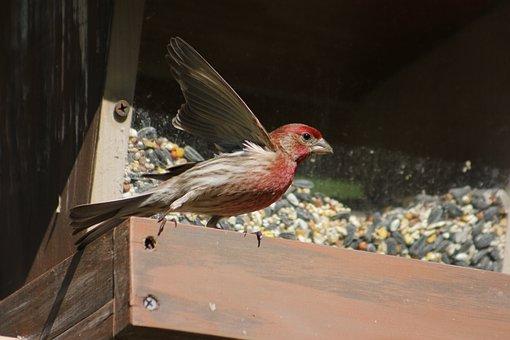 Bird, Nature, Outdoors, Animal, Wildlife, Wild