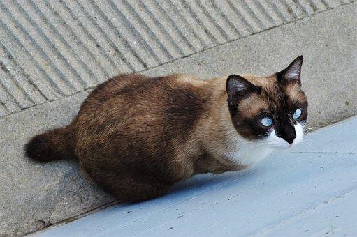 Cat, Adorable, Animal, Cute, Animalia, Mammalia, Pet