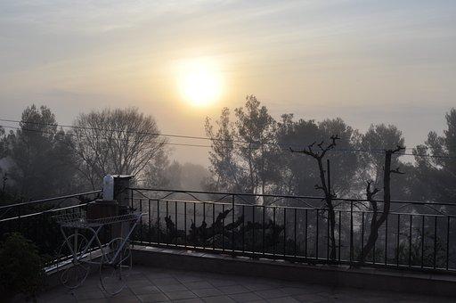 Fog, Horizontal Plane, Dawn, Tree, Sunset, Moody