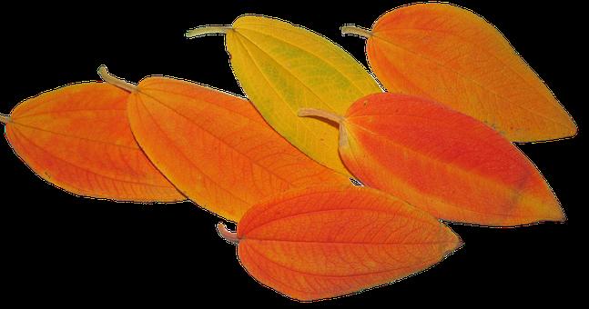 Leaves, Autumn, Fall, Tree, Season