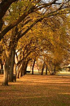 Tree, Fall, Park, Leaf, Nature
