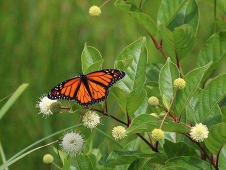 Butterfly, Nature, Insect, Flower, Leaf, Flora, Summer