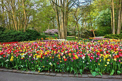 Garden, Flower Garden, Flower Bed, Tulip, Daffodil