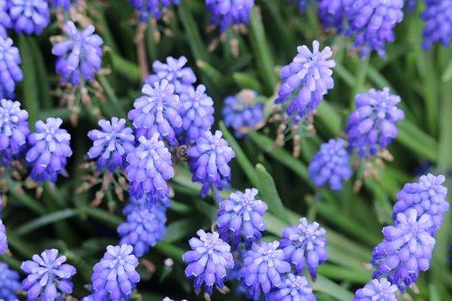 Flower, Nature, Plant, Garden, No One, Petals