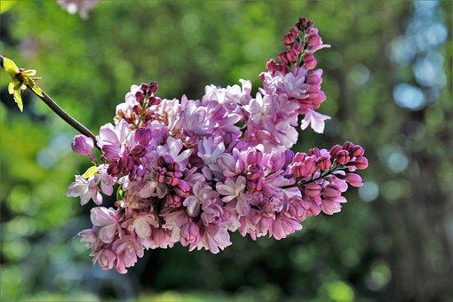 Without, Flower, Plant, Nature, Garden, Petal