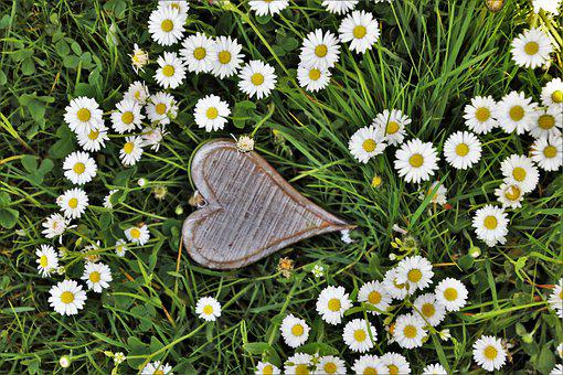 Spring, Heart, Wooden, Daisies, Grass, Nature, Flower