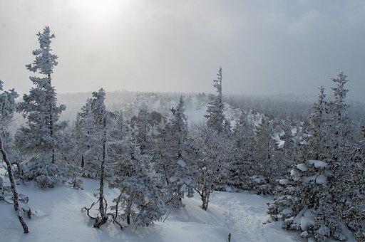 Snow, Winter, Leann, Coldly, Frozen, Ice, Landscape