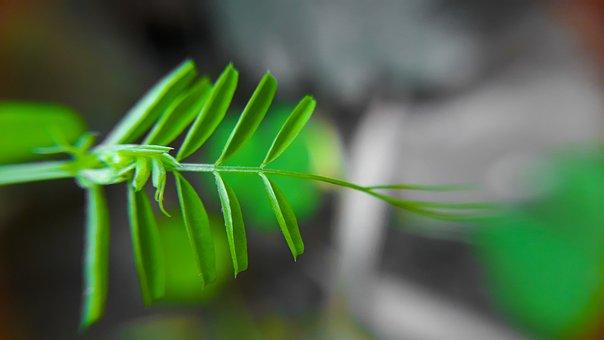 Leaf, Flora, Nature, Growth, Garden, Outdoors