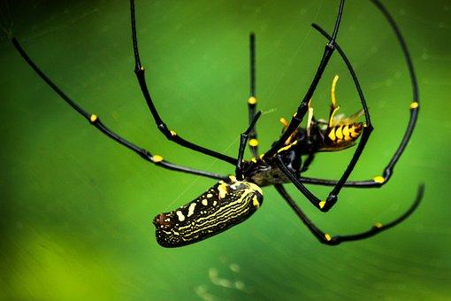 Spider, Macros, Insects, Jumping Spider, Tarantula