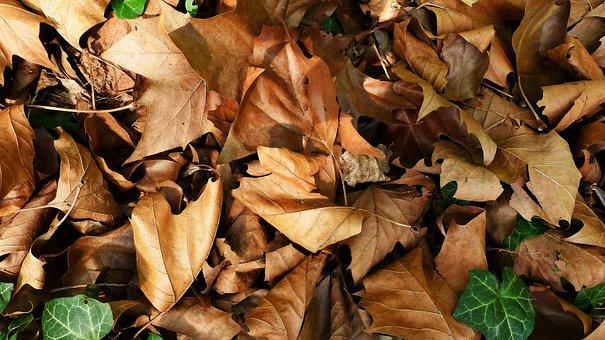 Fall, Leaf, Nature, Tree, Plant, Dry, Soil