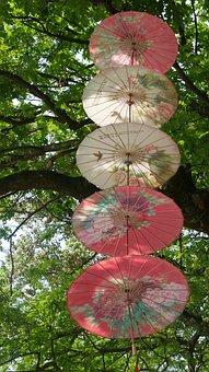 Nature, Tree, Plant, Leaf, Summer, Park, Screen