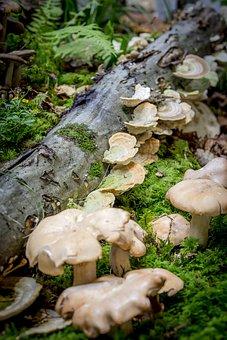 Mushroom, Moss, Autumn, Ochre Turkey Tail, Milchling