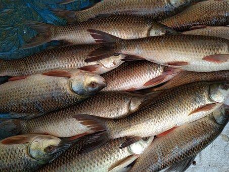 Fish, Catch, Market, Nature