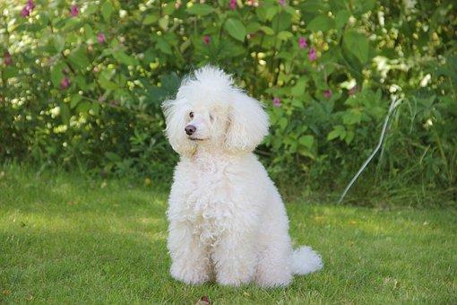 Grass, Outdoors, Mammals, Nature, Cute, Dog