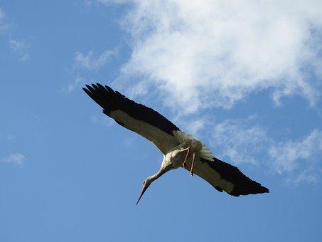 Birds, Nature, Sky, Stork, Spring, White Stork, Socket