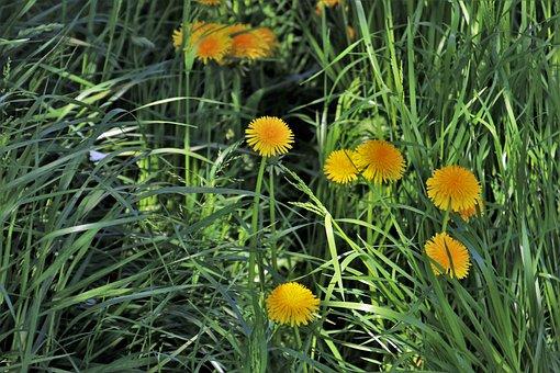 Spring, Nuns, Lawn, Summer, Nature, Morning, Plant