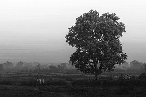 Tree, Landscape, Nature, Wood, Outdoors, Fog, Panoramic