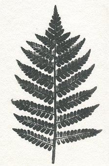 Leaf, Nature, Flora, Desktop, Paper, Vintage, Print