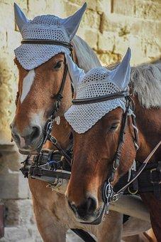 Cavalry, People, Animalia, Portrait, Box, Horses
