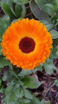 Plant, Nature, Flower, Garden, Leaves, Summer, Petals