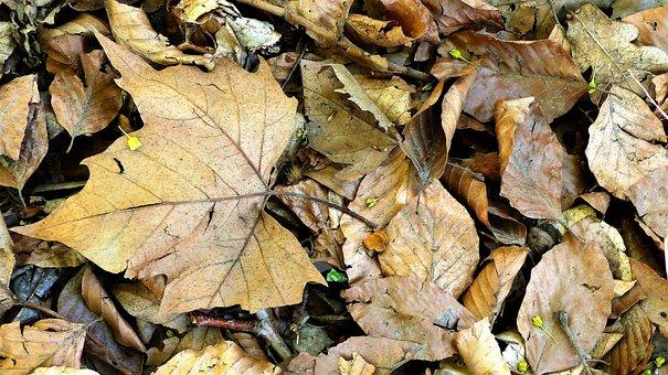 Leaf, Fall, Nature, Tree, Plant, Wood, Forest, Foliage