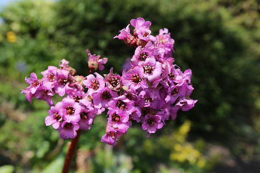 Flower, Nature, Plant, Outdoors, Garden, Lilac