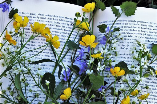 Read, Flower, Plant, Nature, Leaf, This Book Is