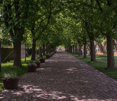 Tree, Avenue, Cobblestones Or Cyclocross Laser, Road