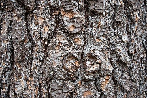 Bark, Desktop, Log, Rough, Trunk, Wood, Tree, Nature