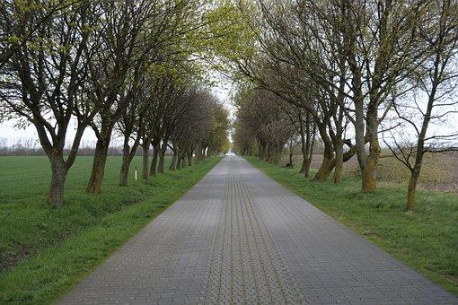 Tree, Road, All Road, Avenue, Nature, Landscape, Scenic
