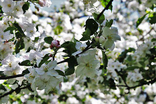 Sad, Flower, Plant, Season, Branch, Tree, The Freshness