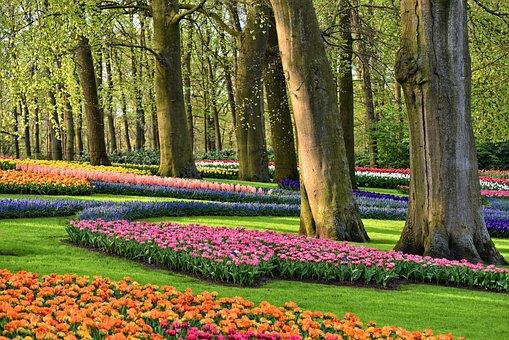 Garden, Flowers, Trees, Tulips, Grass, Spring Flowers
