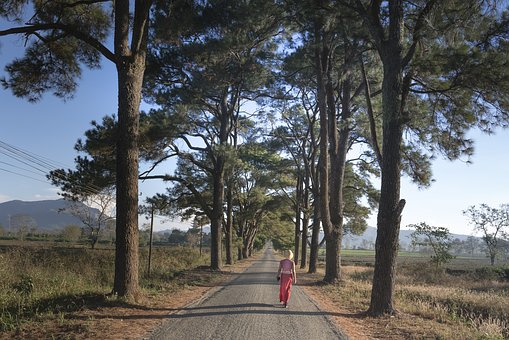 Pine Trees, Gia Lai, Two, Street, The Morning, Town