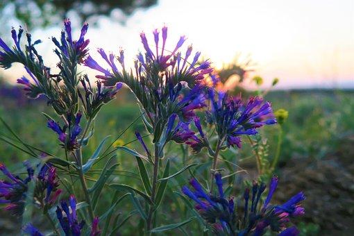 Flower, Nature, Plant, Summer, Blooming, Wildflower, Ot