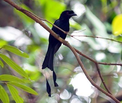 Bird, Wildlife, Wing, Feather, Animal, Wild, Nature