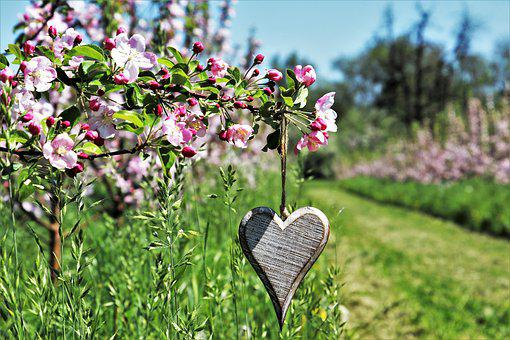 Sad, Fruit Trees, Heart, Wooden, Symbol, Spring, Flower
