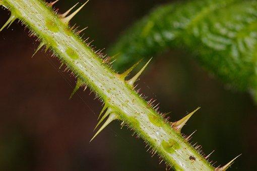 Nature, Plant, Close, Leaf, Garden, Cactus, Wild, Thorn