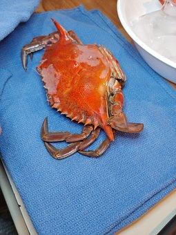 Crab, Seafood, Crustacean, Shellfish, Claw