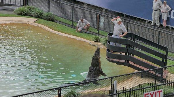 Water, Outdoors, Nature, Crocodile, Crock, Feeding