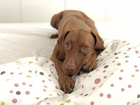 Cute, Dog, Animal, Domestic, Bed, Bedroom, Gotta Love