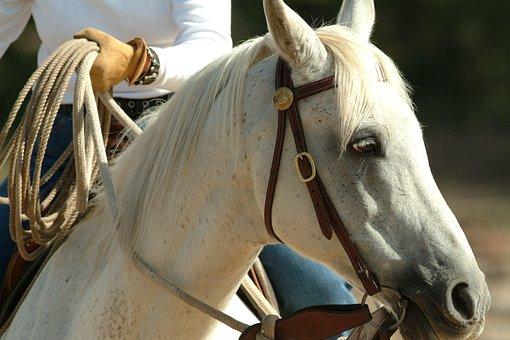 Portrait, Horse, Equine, Equestrian, Purebred, Riding