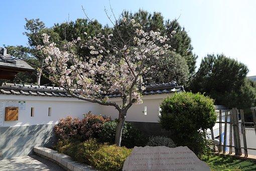Tree, Nature, Flower, Architecture, Outdoor, Garden