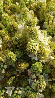 Nature, Flora, Flower, Garden, Leaf, Tuberose