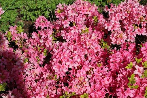 Flower, Plant, Nature, Garden, Flowering, Leaf, Summer