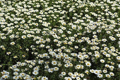 Flower, Plant, Nature, Summer, Garden, Leaves, Flowers