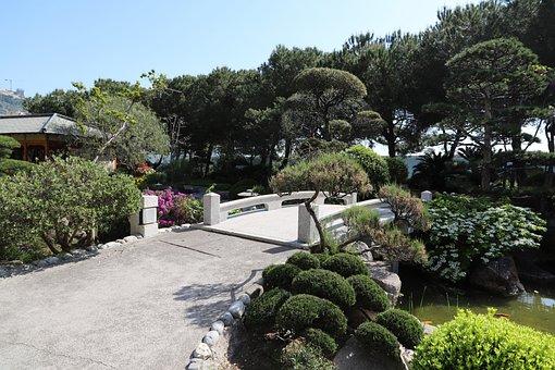 Garden, Nature, Tree, Outdoor, Plant, Summer