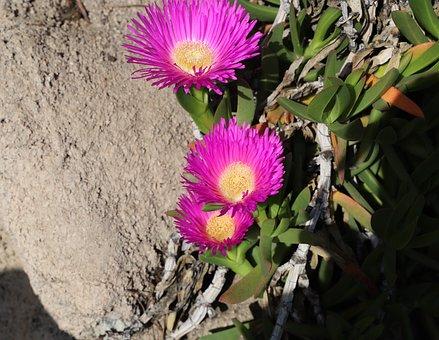 Plant, Nature, Flower, Leaf, Floral, Flowering, Garden