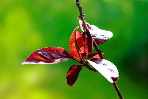Nature, Leaf, Flower, Summer, Close, Garden, Bright
