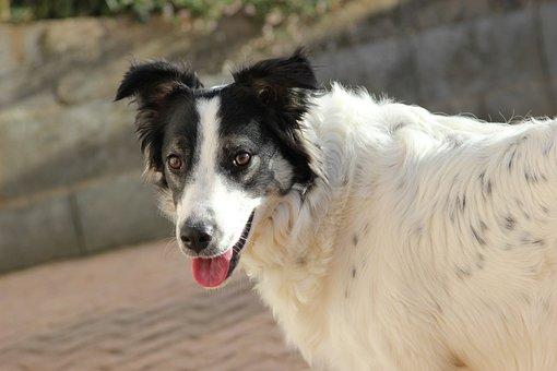 Animal, Dog, Portrait, Mammal, Cute, Pet, Canine, Puppy